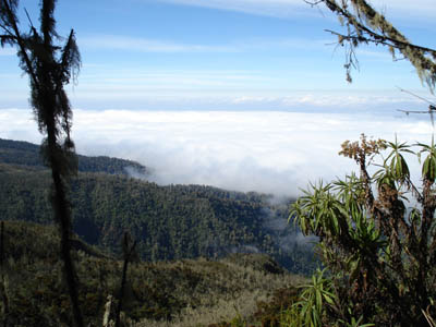 8-Day Kilimanjaro, Kibo Climbing Tour (Rongai Route) from Moshi