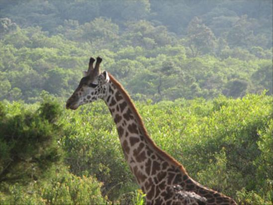 1-Day Safari Arusha National Park from Moshi