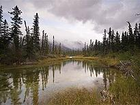 7-Day Vancouver, Canadian Rockies, Hot Springs, Victoria and Whistler Tour  from Vancouver/Seattle, Vancouver out