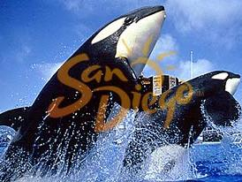 1-Day San Diego, Sea World Tour from Los Angeles - Transfer only