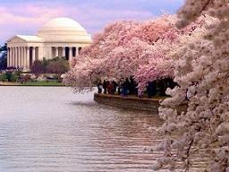 3-Day Washington DC, Cherry Blossom, Longwood Gardens, Mystic Aquarium Tour from Boston