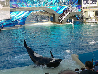 1-Day Sea World of California Tour from Los Angeles