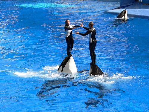 1-Day San Diego, Sea World of California  Tour  from Los Angeles