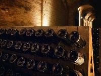 Visit of the cellars and wine tasting