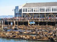 渔人码头 (Fisherman's Wharf)