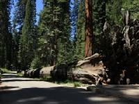 红木国家公园 (Redwood National Park, CA)