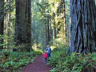 3-Day San Francisco, Redwood Forest and Yosemite Tour from Los Angeles