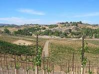 Temecula Wine Tour from San Diego