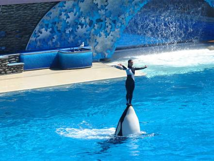 1-Day San Diego, Sea World Tour  from Los Angeles
