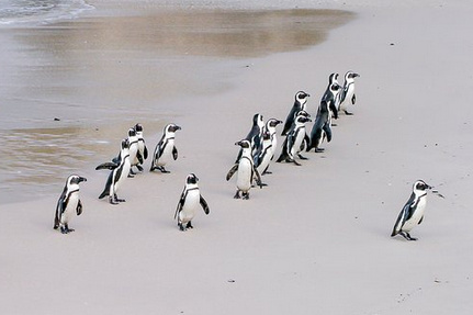 Melbourne City and Penguins Tour from Melbourne