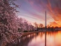 3-Day Niagara Falls, Washington DC Cherry Blossom Tour from New York