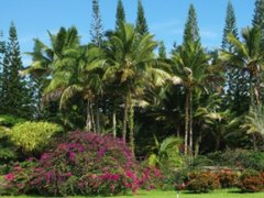 5-Day Hawaii Island Deluxe Tour from Hilo/Honolulu, Kona out