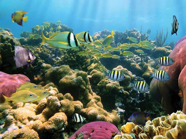 Waikiki Turtle Reef Snorkel