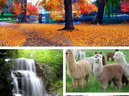 7-Day New England Fall Foliage tour White mountain route ( Boston Airport pick up/transfer)