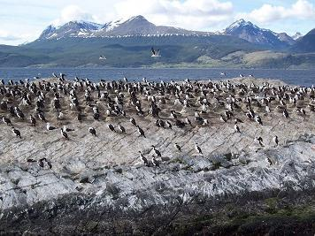 Catamaran Voyage to Penguin Island & Historic Estancia Harberton from Ushuaia