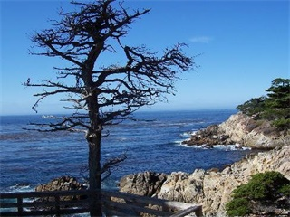 1-Day Monterey Bay, 17 Miles Drive, Carmel Tour from San Francisco