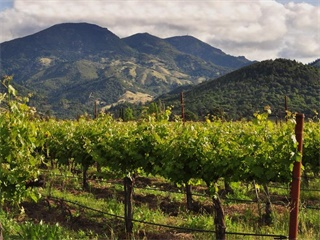 1-Day Napa Valley Tour from San Francisco
