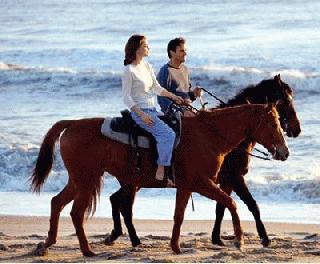 Los Cabos Horseback Riding Tour from Cabo San Lucas/Corridor/San Jose