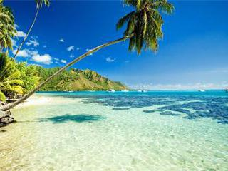 5-Day Pearl Harbor, Mini Circle, Hilo Island Tour from Honolulu with Round Trip Airport Pick Up