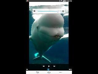 new york, beluga whale