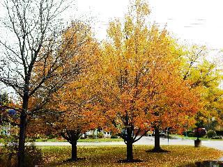 vermont, burlington, fall foliage