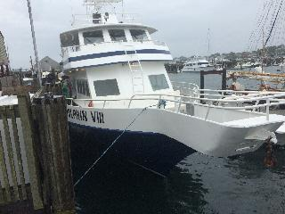 massachusetts, cape cod, provincetown, whale watching