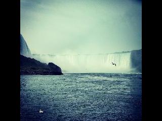 Niagara Seagulls