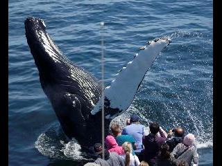 massachusetts, boston, boston harbor cruise, whale watching
