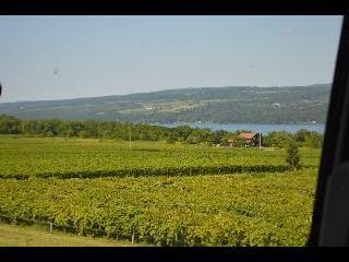 new york, finger lakes, wine vineyard