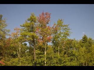 maine, fall foliage