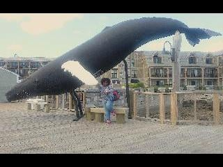 Whale watching, bar harbor