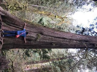 Washington - Olypmic National Park