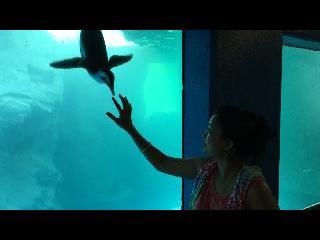 connecticut, mystic, mystic aquarium