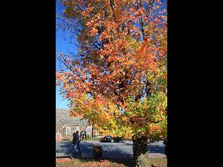 vermont, fall foliage