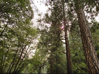 yosemite national park, yosemite, california