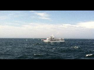 massachusetts, cape cod, whale watching
