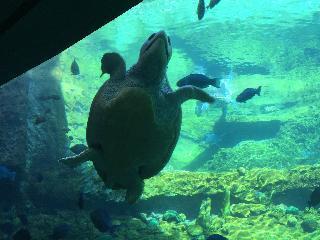 florida, orlando, sea world, turtle