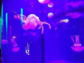 mystic aquarium, connecticut