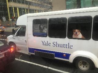 connecticut, yale shuttle