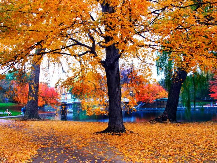 1-Day Fall Foliage Tour from Boston