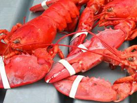 1-Day Maine Lobster Festival Tour from Boston