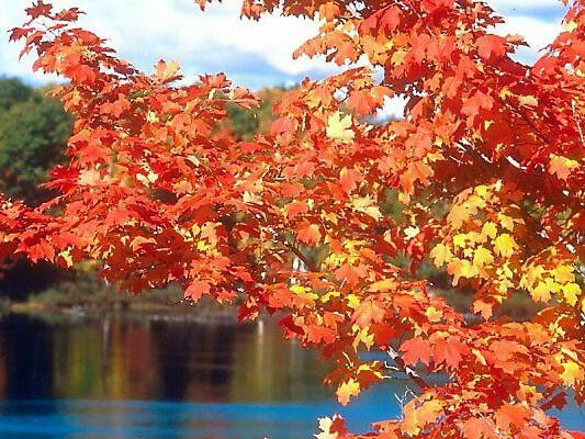 1-Day Connecticut Foliage Sightseeing Tour from Boston