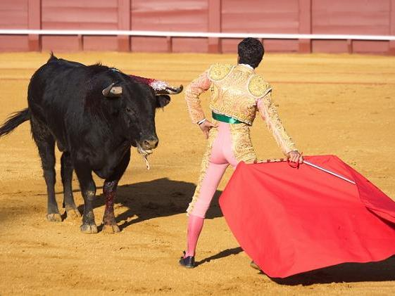 1-Day Bullfight & Panoramic Tour from Madrid