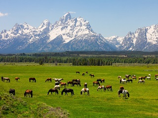 12-Day  Yellowstone National Park Overnight, Grand Teton, Antelope Canyon, Theme Parks Tour from San Francisco with Airport Pick