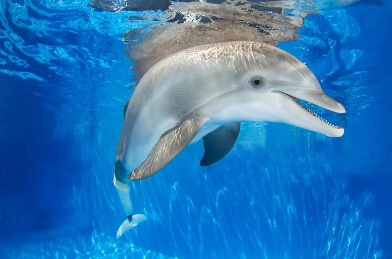 Clearwater Marine Aquarium Tickets