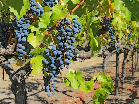 1-Day Deluxe Sonoma & Napa Valley Wine Country Tour