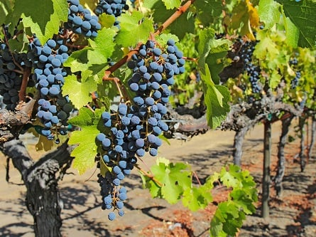 1-Day Deluxe Sonoma & Napa Valley Wine Country Tour...