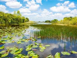 1-Day Everglades & Miami Adventure from Orlando