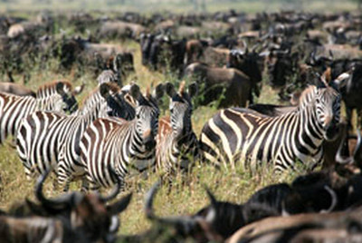 4-Day Northern Tanzania (2-Day Safari) Tour from Moshi