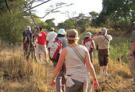 5-Day Northern Tanzania (3-Day Safari) Tour from Moshi